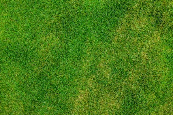 zakładanie trawnika w radomiu